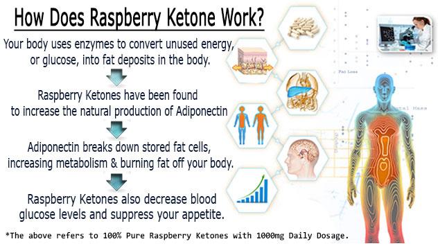 Wild raspberry ketone : Efficacité et Résultats de l'étude américaine